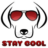 """Dog in sunglasses with """"stay cool"""" underneath"""