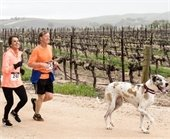 Couple jogging with mastiff in vineyard