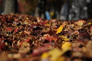 fall-leaves-clean-up-paso-robles-300x199